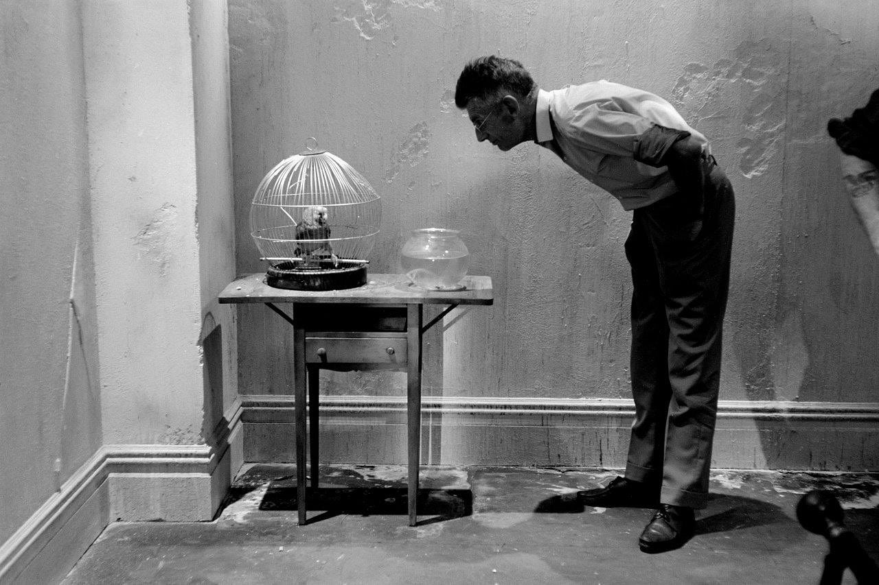 Steve Schapiro : Samuel Beckett looking at a parrot, 1964.